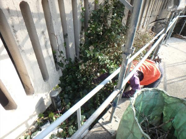 (12)外壁周り蔦除去作業2