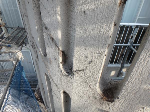 (13)外壁周り蔦除去作業3